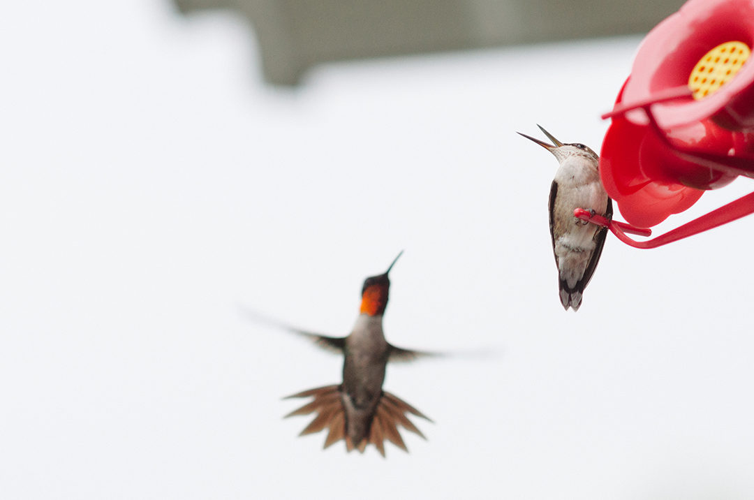 Hummingbird Happiness - foxandpennydesign com